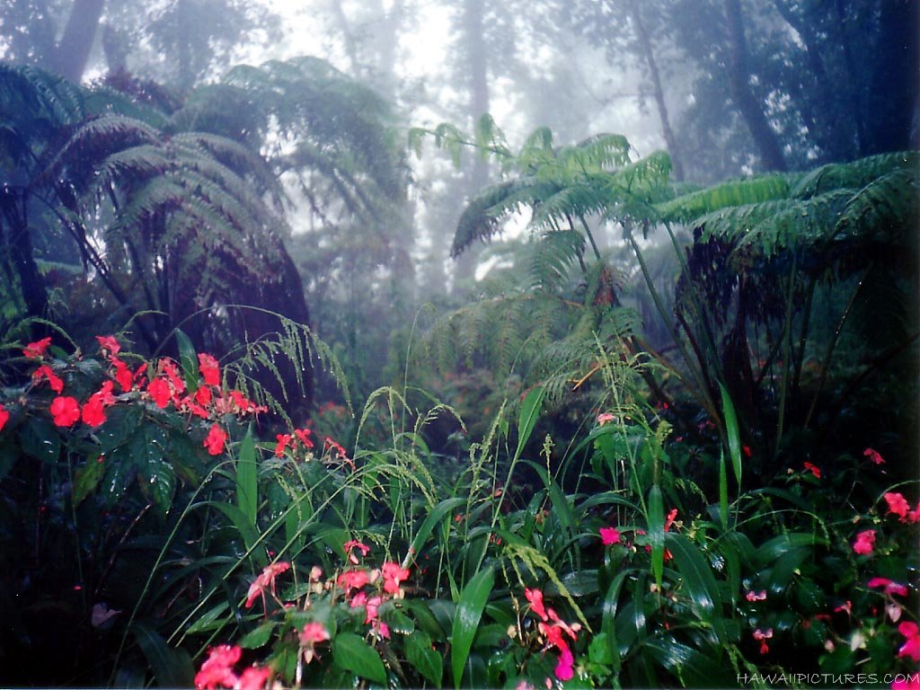Tropical Jungle in Krabi, trekking excursion from Resort